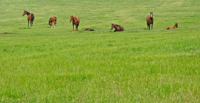 2020年シルクホースクラブ募集馬(牡)血統診断一覧データをココナラにてお申込みいただけるようにしました