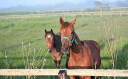 【エルテアトロの19】(牝)~血統診断-馬場・距離適性-~ロードサラブレッドオーナーズクラブ
